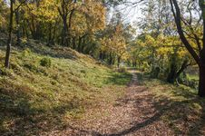 Free Autumn Landscape In The Park Area. Royalty Free Stock Images - 36044669