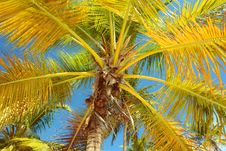 Free Tropical Background Royalty Free Stock Photos - 36045468