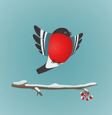Free Bullfinch Flying And Ashberry Twig Royalty Free Stock Photo - 36046525