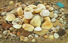 Free Shells Royalty Free Stock Photo - 36052435
