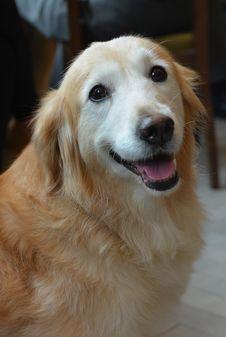 Free Dog Royalty Free Stock Image - 36055156