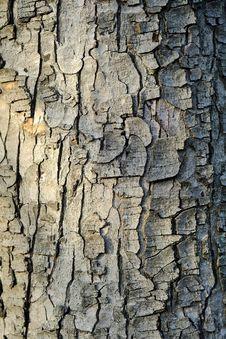 Free Bark Texture Stock Image - 36060571