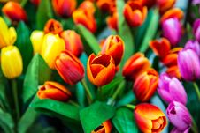 Artificial Tulips Stock Images