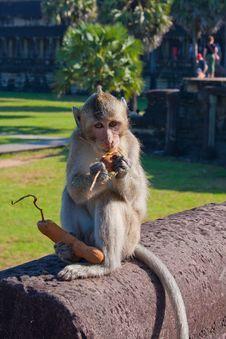 Monkey Eat Near The Angor Wat Temple Stock Photo