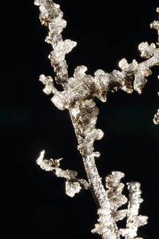 Free Closeup Of White Frost On Twig Stock Photos - 36068623