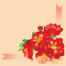 Free Red Rose. Royalty Free Stock Images - 36069079