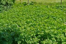 Free Home Backyard Vegetable Garden Royalty Free Stock Photos - 36074028