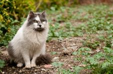 Free Portrait Of A Domestic Cat Stock Photography - 36075232