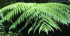 Free Fern Stock Photo - 36078280