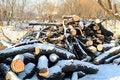 Free Logs Royalty Free Stock Image - 36088856
