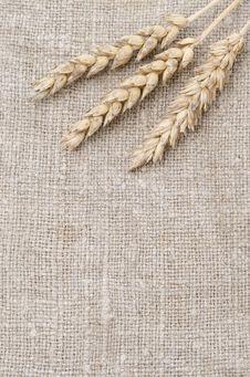 Wheat Ears On Burlap Background Stock Image