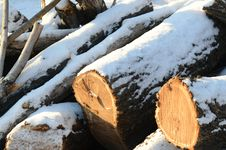 Free Logs Stock Photography - 36088842