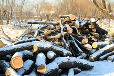 Free Logs Royalty Free Stock Image - 36088856