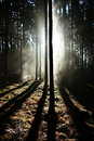 Free Sunrise In The Forest Stock Images - 36090694
