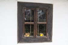 Free Old Window With Two Quinces Stock Image - 36090501
