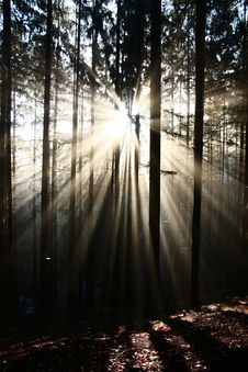 Sun Rays Stock Images