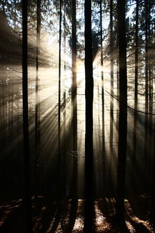 Free Sun Rays Stock Image - 36090631