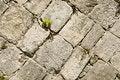 Free Castle Block Brick Walls Stock Image - 3615031
