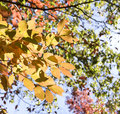 Free Fall Leaves Royalty Free Stock Photos - 3617988