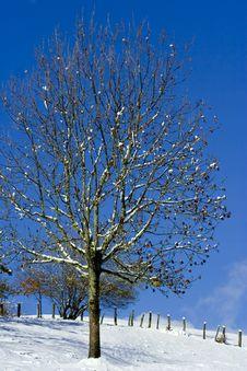 Free Lonely Tree Stock Photo - 3610000