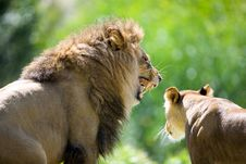 Free Lion Stock Photography - 3611342