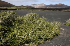 Free Volcanic Land In Lanzarote Stock Photography - 3612222
