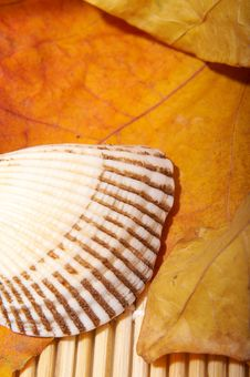 Free Autumn Leaf And Shell Stock Photo - 3612540