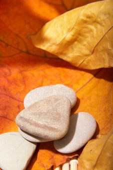 Free Autumn Leaves And Stones Stock Photo - 3612650