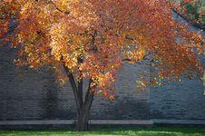 Free Autumn Tree Stock Photo - 3614330