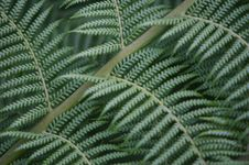 Free Fern Tree Stock Photo - 3614420