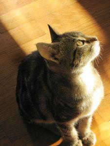 Free Little Cat Stock Photos - 3615873
