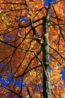 Free A Blaze Of Autumn Colors. Stock Image - 3616991