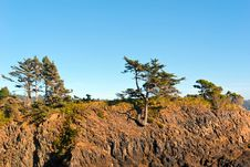 Free Cliff Trees Stock Images - 3618354