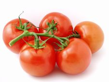 Free The Bunch Of Tomatoes Stock Photo - 3618380