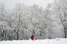 Free Fresh Snow Stock Image - 3618431