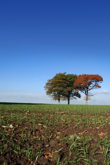 Free Cultivated Field With Trees Stock Images - 3619574
