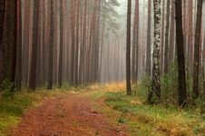 Free Forest In Autumn. Royalty Free Stock Image - 36102966