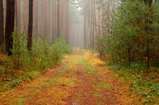Free Forest In Autumn. Royalty Free Stock Photography - 36103027