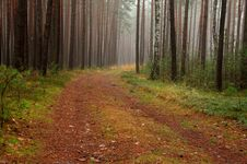 Free Forest In Autumn. Royalty Free Stock Photography - 36103267
