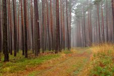 Free Forest In Autumn. Stock Image - 36103621