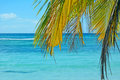 Free Tropical Background Stock Image - 36112001