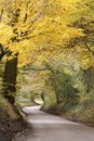 Free Hertfordshire Country Road Royalty Free Stock Image - 36118216