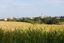 Free Corn Field Stock Photos - 36113543