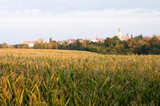 Free Corn Field Royalty Free Stock Photo - 36114195