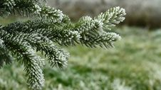 Free Video Of Pin Tree Covered By Freezing Fog Royalty Free Stock Photography - 36116237