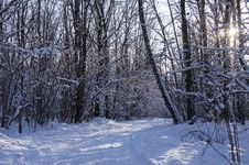 Free The Road In The Winter Wood In A Cleaar Sunny Day Royalty Free Stock Photography - 36116447