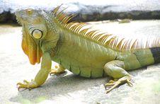 Free Strange Lizard Stock Photos - 36116873