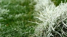 Free Video Of Green Grass Covered By Freezing Fog Stock Image - 36117641