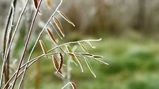 Free Video Of Green Leaves Covered By Freezing Fog Stock Photo - 36117930