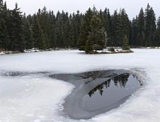 Free Pond And Forest In Winter Royalty Free Stock Photography - 36119437